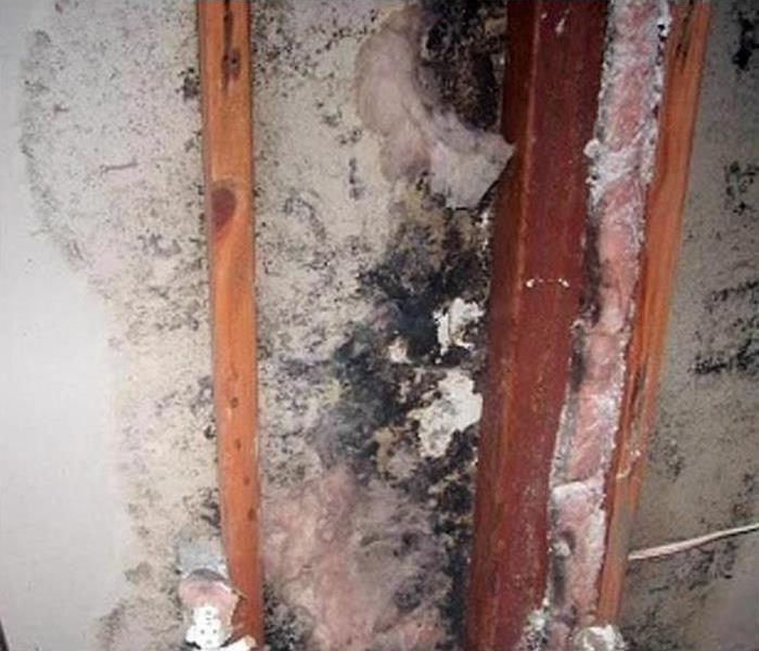 Mold Damage – Manayunk