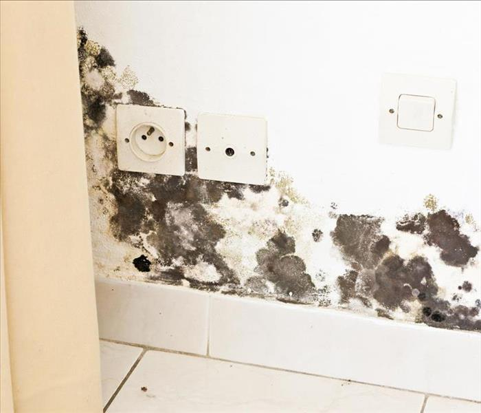 Mold Remediation Tips to Prevent Mold Damage in Your Philadelphia Home