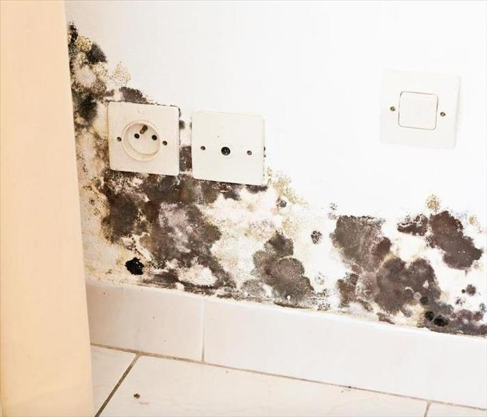 Mold Remediation The Importance of Professional Mold Remediation in Your Roxborough Home
