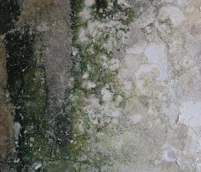Mold Remediation The Right Measures to Take after Experiencing Mold Damage in Mt Airy